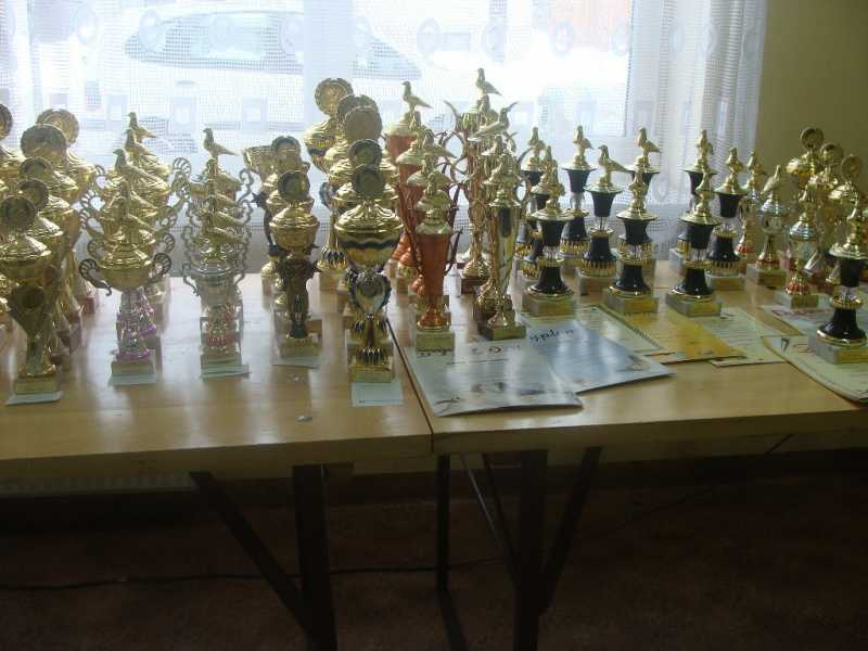Okręgowa Wystawa Gołębi Pocztowych 2010 rok